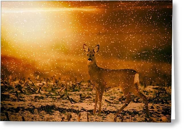 Snowy Evening Greeting Cards - Roe Deer in a Wintry Sunset Greeting Card by Mountain Dreams