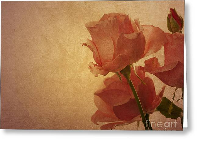 Pink Flower Prints Pyrography Greeting Cards - Roses Greeting Card by Jelena Jovanovic