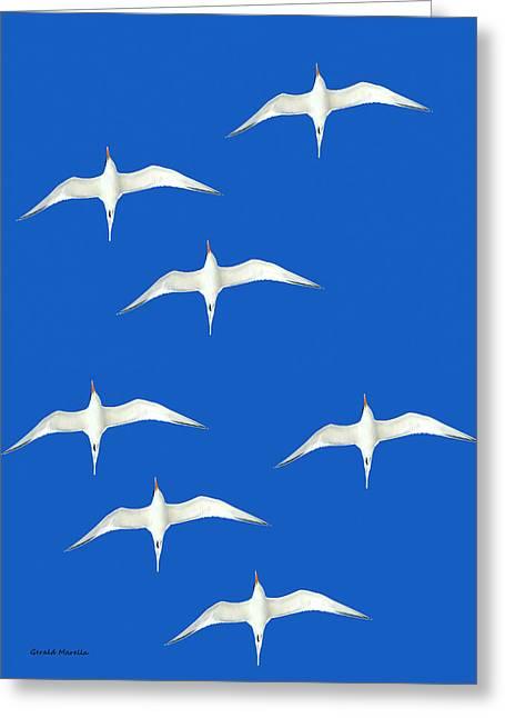 Hovering Greeting Cards - Royal Terns Greeting Card by Gerald Marella