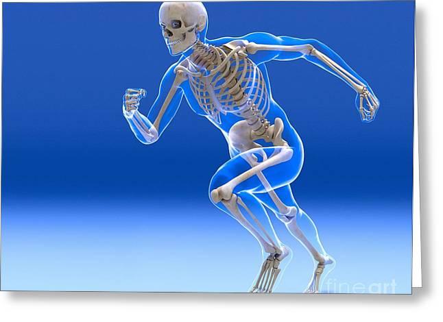 Sprinter Greeting Cards - Running Skeleton In Body, Artwork Greeting Card by Roger Harris
