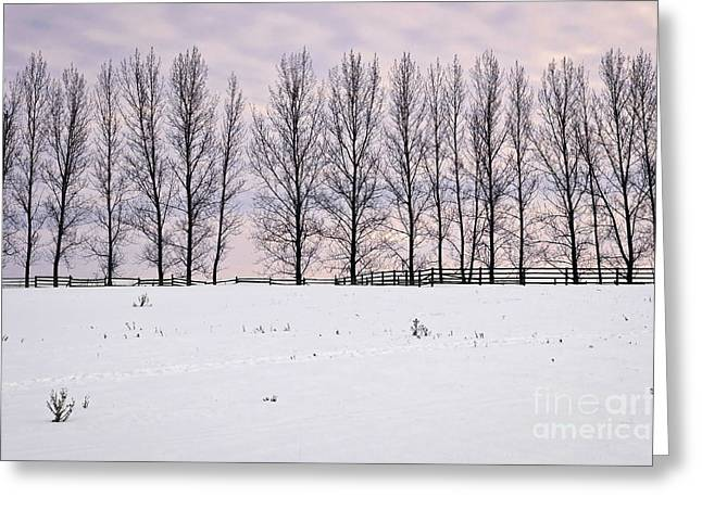 Snowy Evening Greeting Cards - Rural winter landscape Greeting Card by Elena Elisseeva