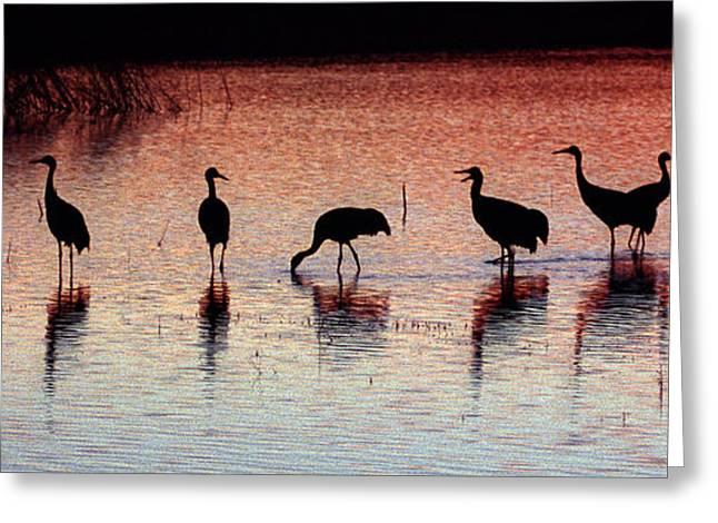 Steven Ralser Greeting Cards - Sandhill Cranes Greeting Card by Steven Ralser