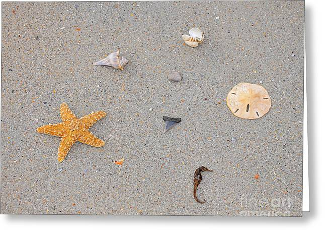 Star Fish Greeting Cards - Sea Swag Greeting Card by Al Powell Photography USA