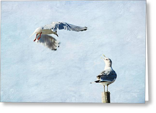 Spring Scenes Mixed Media Greeting Cards - Seagulls Greeting Card by Heike Hultsch