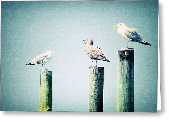 Beach Cottage Style Greeting Cards - 3 Seal Gulls Greeting Card by Dick Wood