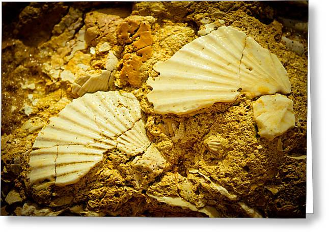 Aquatic Pyrography Greeting Cards - Seashell in stone Greeting Card by Raimond Klavins