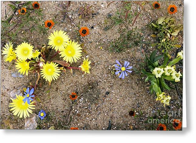 Skilpad Nature Reserve, South Africa Greeting Card by Bob Gibbons