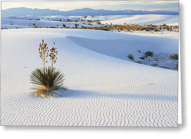 Recently Sold -  - Sand Patterns Greeting Cards - Soaptree Yucca In Gypsum Sand White Greeting Card by Konrad Wothe