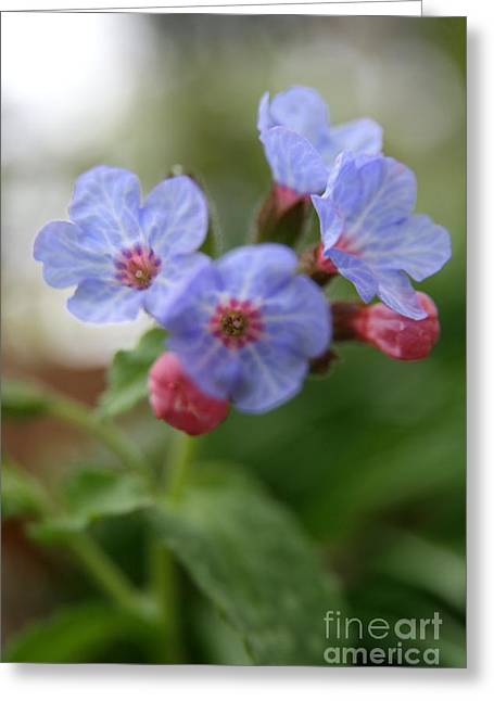Wildflower Photography Greeting Cards - Soft Light Greeting Card by Neal  Eslinger