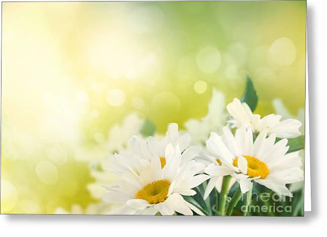 Mythja Photographs Greeting Cards - Spring background Greeting Card by Mythja  Photography
