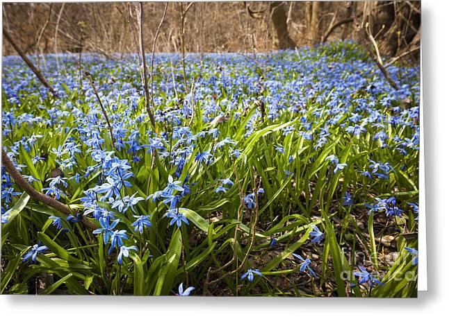 Carpet Photographs Greeting Cards - Spring blue flowers Greeting Card by Elena Elisseeva