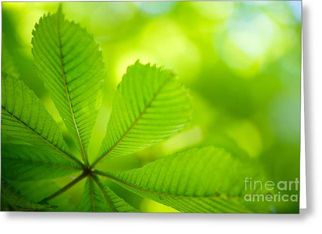 Focus Greeting Cards - Spring Green Greeting Card by Nailia Schwarz
