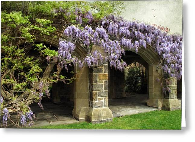 Wisteria Leaves Greeting Cards - Spring Wisteria Greeting Card by Jessica Jenney