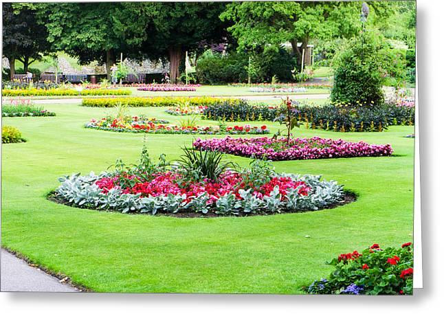 Begonia Garden Greeting Cards - Summer garden Greeting Card by Tom Gowanlock