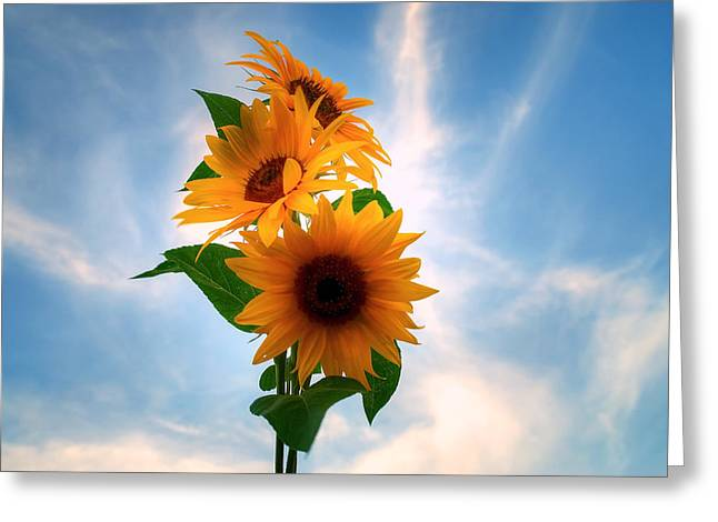 Yellow Sunflower Pyrography Greeting Cards - Summer Greeting Card by Steffen Gierok