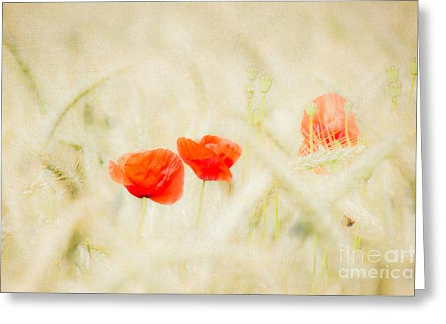 Cornfield Mixed Media Greeting Cards - Summerfeeling Greeting Card by Angela Doelling AD DESIGN Photo and PhotoArt
