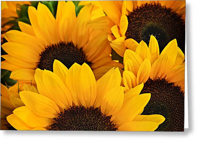 Square Format Greeting Cards - Sunflowers Greeting Card by Elena Elisseeva