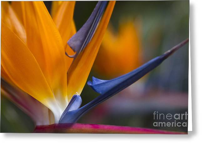 Strelitzia Greeting Cards - Take Time to Dream Greeting Card by Sharon Mau