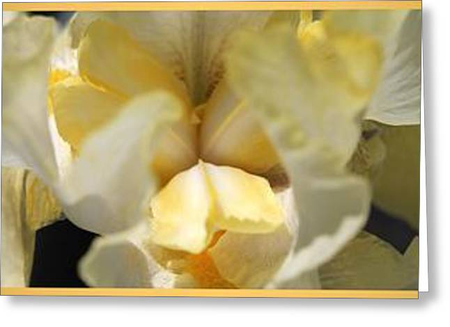 Tall Bearded Iris Named Again And Again Greeting Card by J McCombie