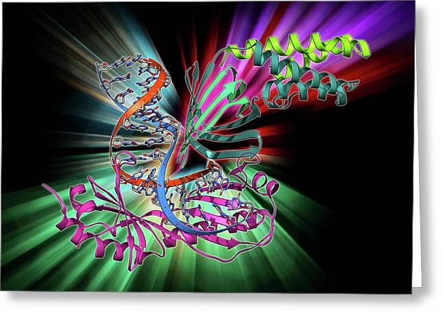 Tata Box-binding Protein Complex Greeting Card by Laguna Design