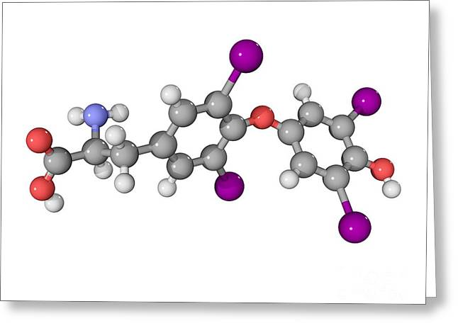 Controlling Development Greeting Cards - Thyroxine Hormone Molecule Greeting Card by Laguna Design