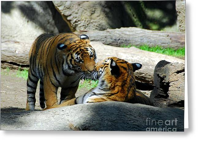 Tiger Photographs Greeting Cards - Tiger Love 2 Greeting Card by Mel Steinhauer