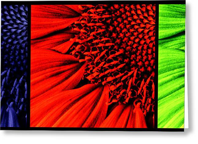 Organic Greeting Cards - 3 tile Sunflower colors Greeting Card by Mark Kiver