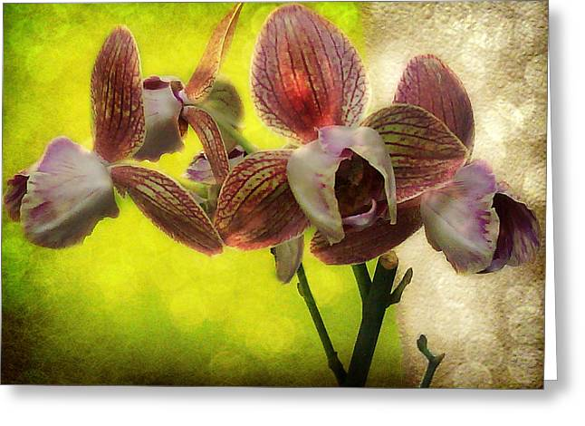 Industrial Background Greeting Cards - 3 Tone Orchids Series 1 Greeting Card by CJ Anderson