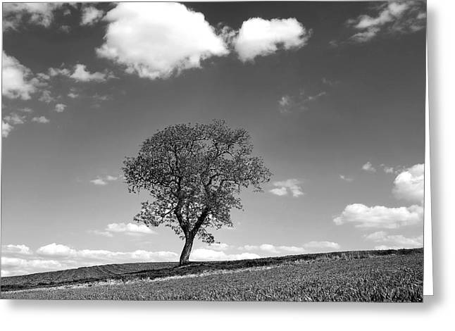 Spring Scenes Greeting Cards - Tree Greeting Card by Bernard Jaubert