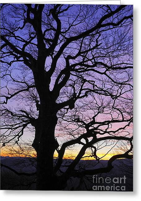 Winter Night Greeting Cards - Tree Greeting Card by Nino Marcutti
