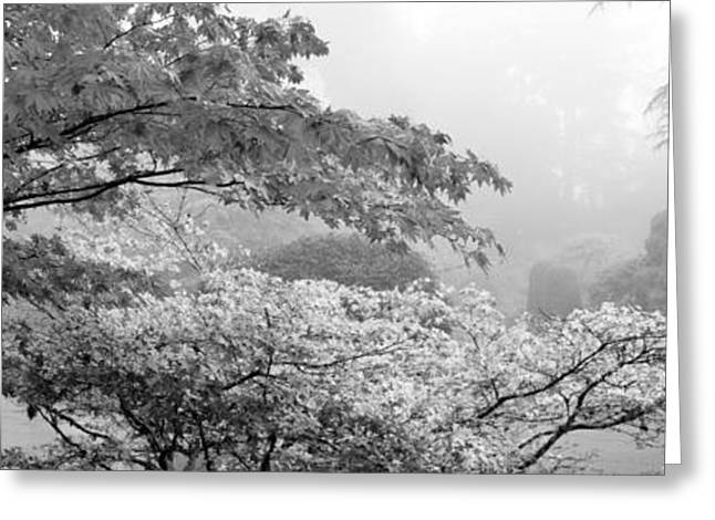 Butchart Gardens Greeting Cards - Trees In A Garden, Butchart Gardens Greeting Card by Panoramic Images