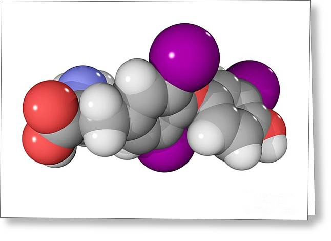 Controlling Development Greeting Cards - Triiodothyronine Hormone Molecule Greeting Card by Laguna Design