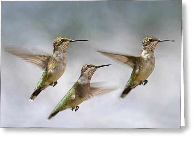 Trio Greeting Cards - Trio Greeting Card by Betsy C  Knapp
