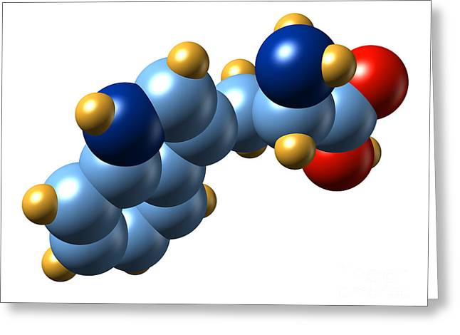 Essential Greeting Cards - Tryptophan, Molecular Model Greeting Card by Dr. Mark J. Winter