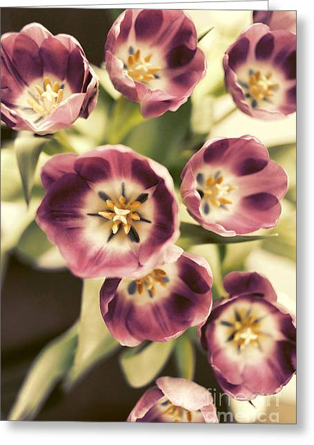 Purple Tulip Flower Greeting Cards - Tulips Greeting Card by HD Connelly