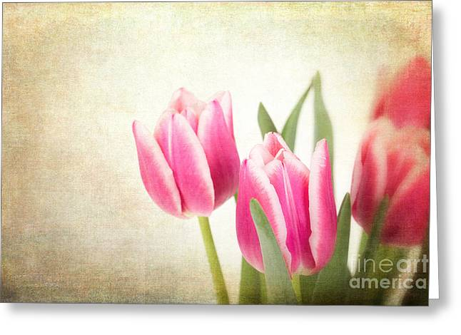 Tulips Vintage Greeting Card by Jane Rix