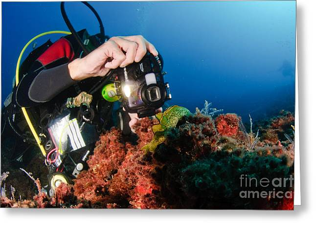 Scuba Diving Greeting Cards - Underwater Survey Greeting Card by Hagai Nativ