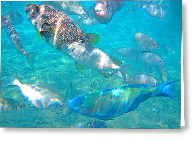 Puffer Digital Art Greeting Cards - Underwater World. Greeting Card by Andy Za