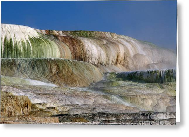 Mammoth Terrace Greeting Cards - Upper Terrace At Mammoth Hot Springs Greeting Card by Tracy Knauer