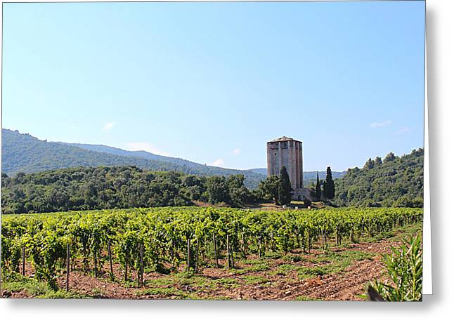 Greece Vineyards Greeting Cards - Vineguard Greeting Card by Rasko Aksentijevic