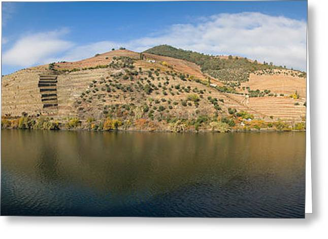 Winemaking Greeting Cards - Vineyards At The Riverside, Cima Corgo Greeting Card by Panoramic Images