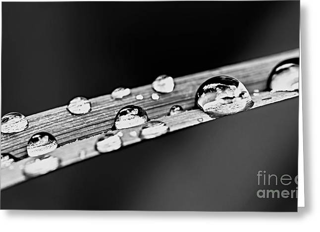 Dew Greeting Cards - Water drops on grass blade Greeting Card by Elena Elisseeva