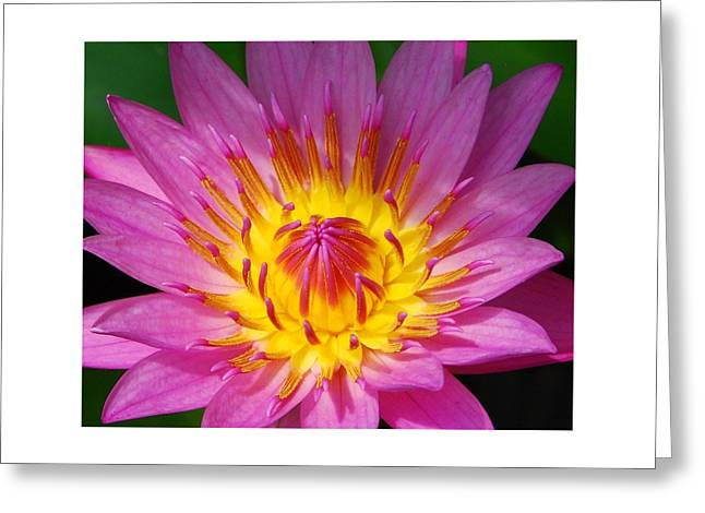Water Lilly Greeting Cards - Water Lily 1 Greeting Card by Allen Beatty