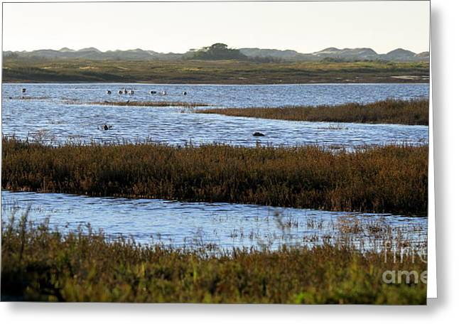 Recently Sold -  - Peaceful Scenery Greeting Cards - Wetland Greeting Card by Henrik Lehnerer