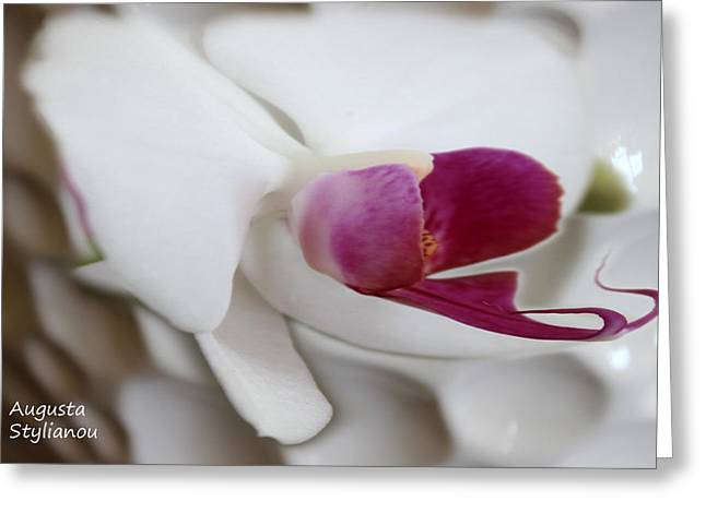 Vivid Colour Digital Art Greeting Cards - White Orchid Greeting Card by Augusta Stylianou