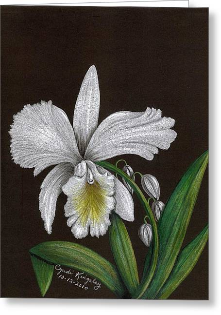 Cyndi Kingsley Greeting Cards - White Orchid Greeting Card by Cyndi Kingsley