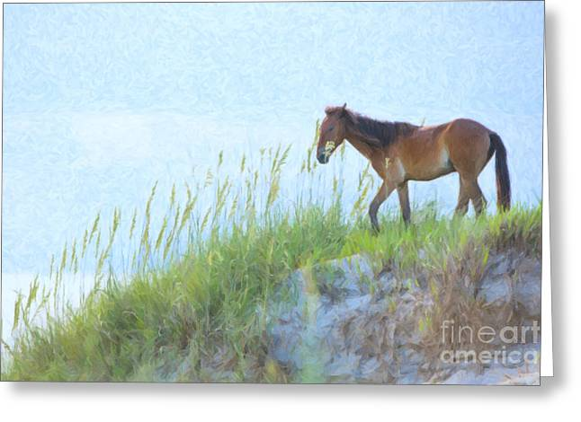 Wild Horses Photographs Greeting Cards - Wild Horse on the Outer Banks Greeting Card by Diane Diederich