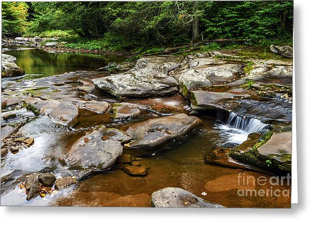 Williams River Headwaters Greeting Card by Thomas R Fletcher