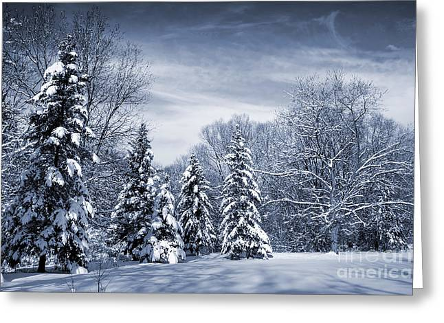 Winter Scenery Greeting Cards - Winter forest Greeting Card by Elena Elisseeva