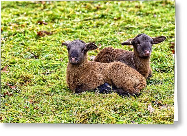 Appalachian Farm Greeting Cards - Winter Lambs Greeting Card by Thomas R Fletcher